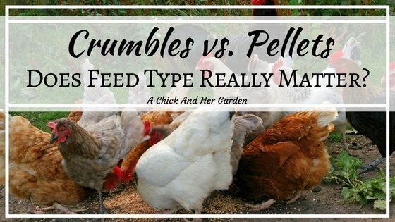 How Feed Type Can Lower Costs