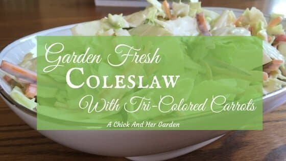 Garden Fresh Coleslaw With Tri-Colored Carrots