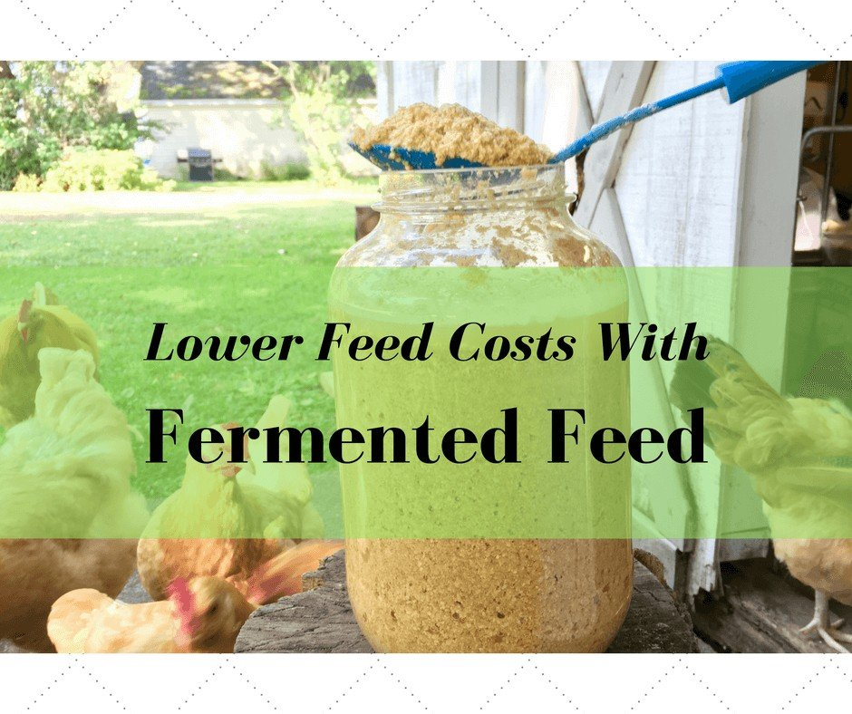 Lower Chicken Costs with Fermented Feed