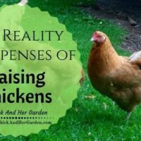 What does it REALLY cost to raise chickens?
