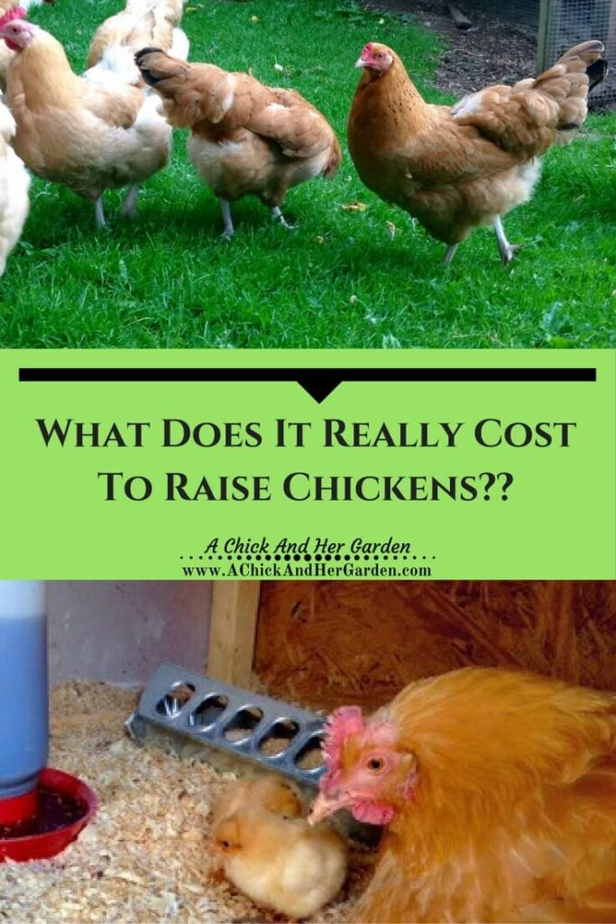 What does it REALLY cost to raise chickens??