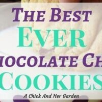 Best Ever Chocolate Chip Cookies!