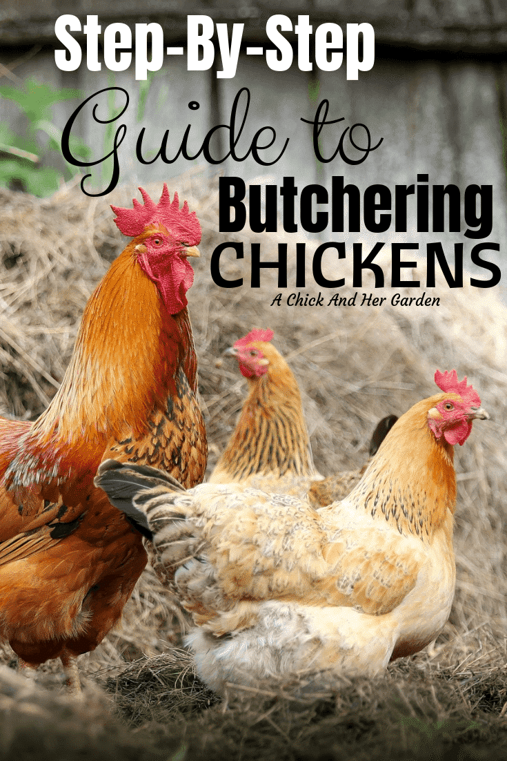 With this guide, our first time butchering chickens on the homestead was a piece of cake! #butcheringchickens #raisingchickens #achickandhergarden