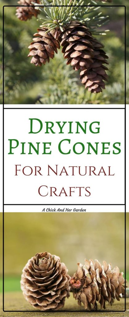 I love crafting with natural materials! Use this tutorial to prepare your pine cones for crafts!