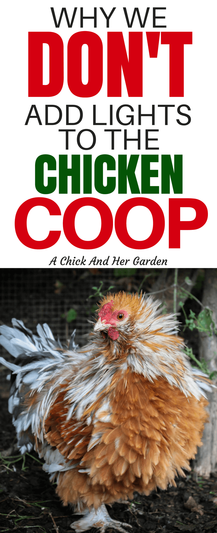 Some people opt to add lights to the chicken coop for various reasons. Increase egg production, heat, and to deter predators. But this is exactly why we don't add lights to the chicken coop! #backyardchickens #homestedin #raisingchickens #chickens #selfsufficiency #achickandhergarden