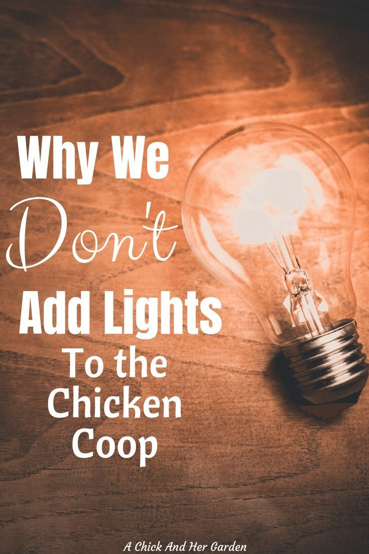 Lights in the chicken coop seems like a good idea. More eggs, heat, what's not to love? These are some great reasons why you might want to reconsider adding lights to your chicken coop! #chickens #chickensinthewinter #backyardchickens #winterchickencare #achickandhergarden