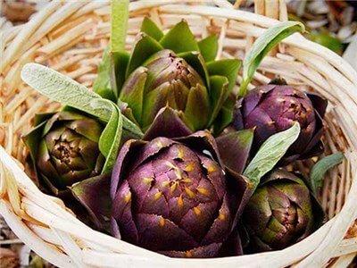 artichoke-purple-of-romagna