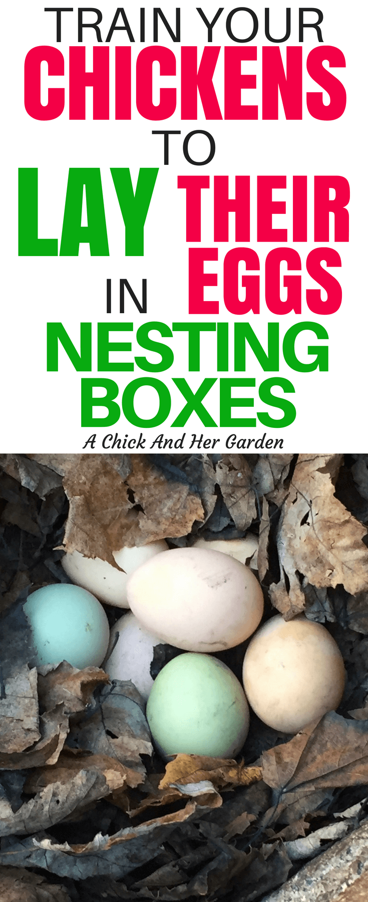 Finding eggs all over your yard in hidden nests is fun for about a day. These two steps will train your chickens to lay in nesting boxes! #chickens #backyardchickens #raisingchickens #homesteading #selfsufficiency #achickhergarden