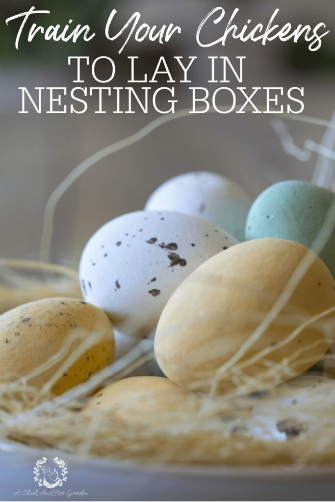 The first time you find a hidden nest it's pretty funny, but when your chickens are regularly sending you on and Easter Egg Hunt it can get pretty frustrating! These tips where just what I needed to train my chickens to lay in nesting boxes! #backyardchickens #homesteadchickens #raisingchickens #chickeneggs #homesteadliving #sustainableliving #achickandhergarden