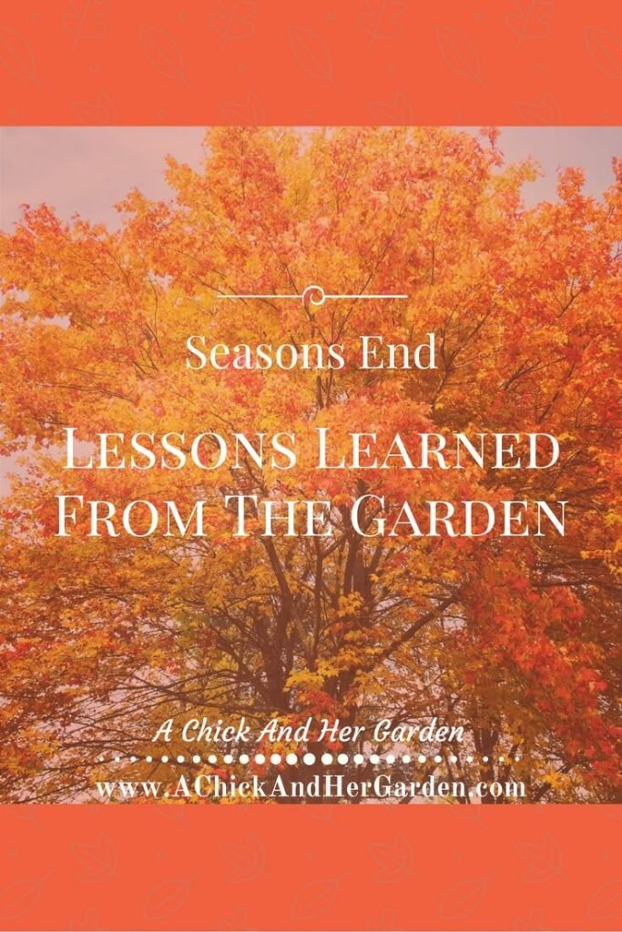 Every year we learn something new in the garden. Here are my lessons, what have you learned?