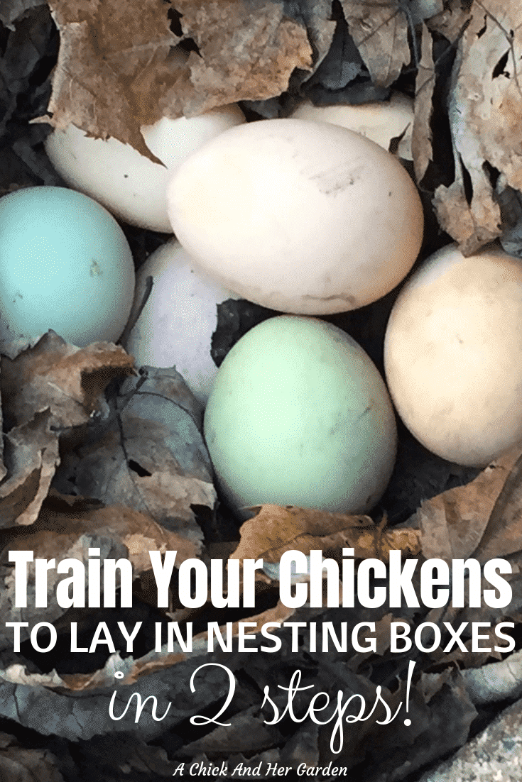 If you're finding eggs hidden all over, or on the floor of the chicken coop, these 2 tips are all you need to train your chickens to lay in nesting boxes! #nestingboxes #backyardchickens #raisingchickens #achickandhergarden