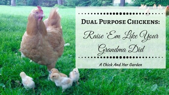 Dual Purpose Chickens: Raise 'Em Like Your Grandma Did ~ An eBook