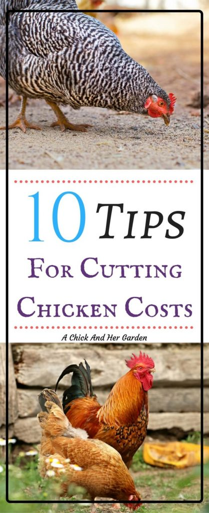 At our homestead we strive to provide the best possible care to our chickens. But we are always looking for ways to cut costs! Find out how we have lowered our costs for raising chickens...