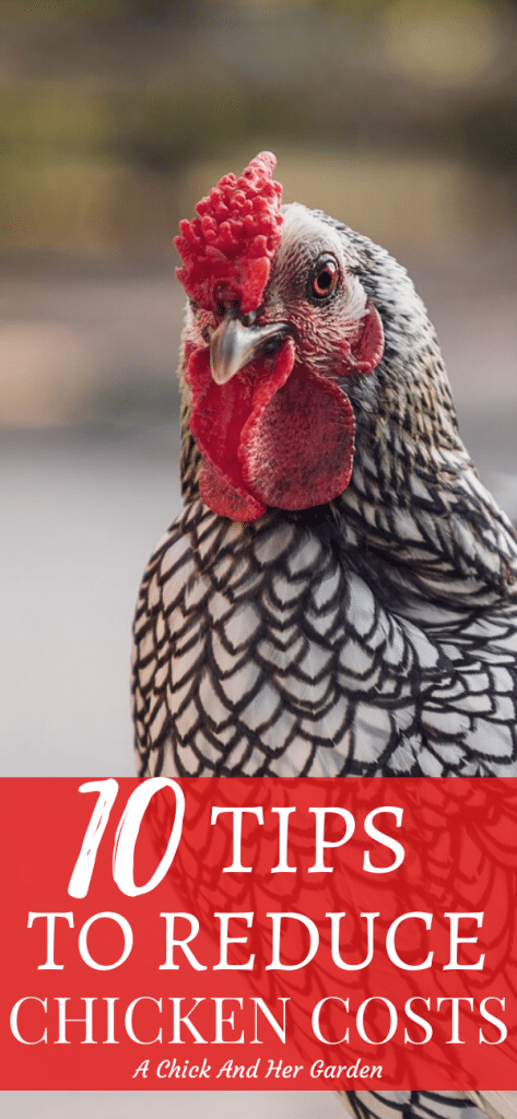 These tips for cutting costs while raising chickens are so easy! #raisingchickens #backyardchickens #backyardpoultry #chickens #homesteadchickens #homesteading #homesteadanimals #achickandhergarden