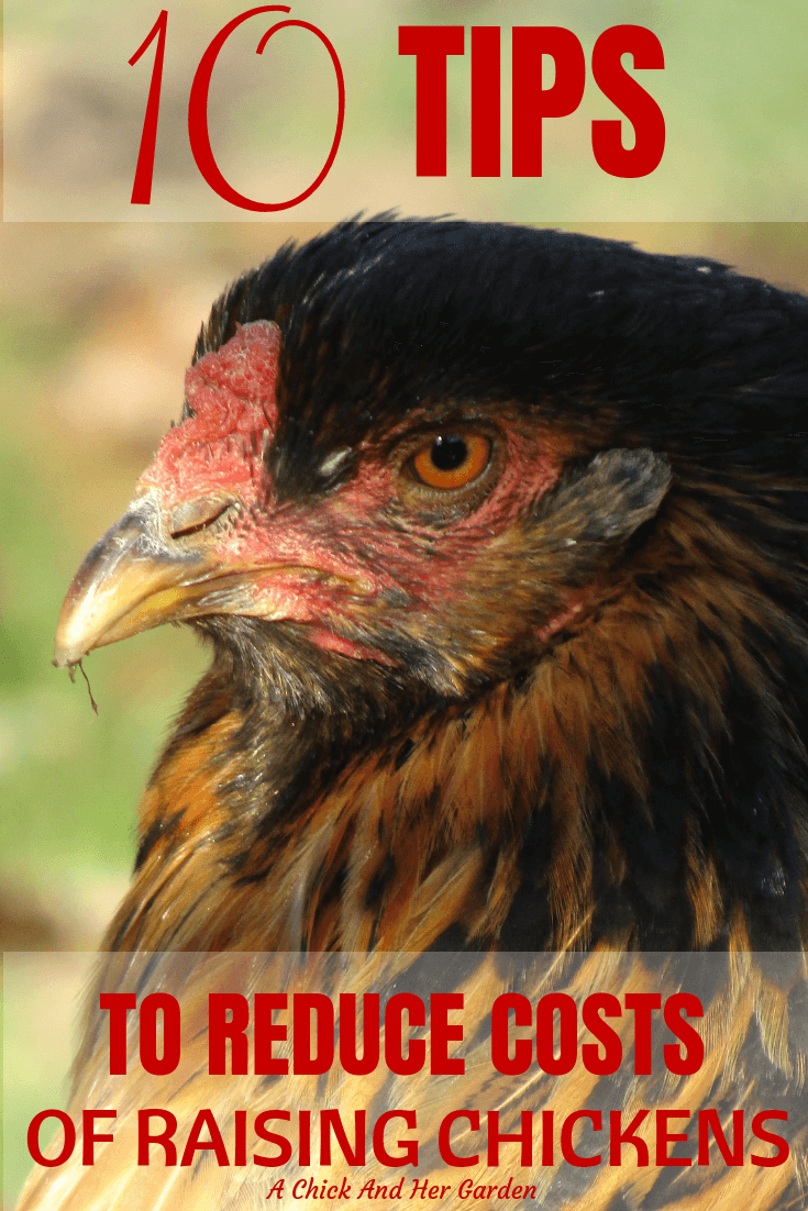 Chickens don't have to be an expensive animal to keep! This 10 tips are great to help lower the costs of keeping chickens! #backyardchickens #raisingchickens #chickens #achickandhergarden