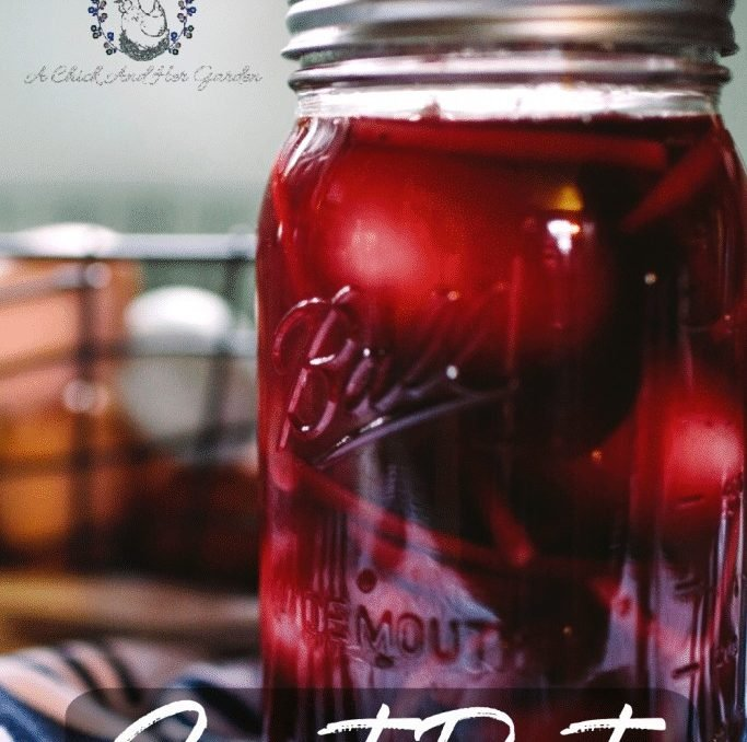 Pickled eggs are my favorite way to use up extra eggs! And this recipe for sweet beet pickled eggs is perfect! Tey don't last long in our house! These eggs are amazing to top off a salad or on their own as a quick snack! #pickledeggs #eggrecipes #eggs #homesteadrecipes #foodpreservation #pickling #achickandhergarden