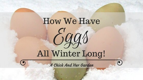How We Have Eggs All Winter Long
