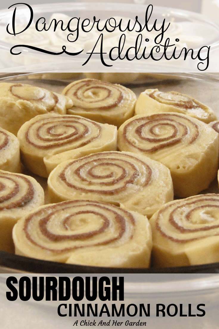 Nothing is better on a cold morning than a cinnamon roll and a cup of coffee! These sourdough cinnamon rolls have proved to be even better than your everyday cinnamon roll! #cinnamonrollrecipes #sourdoughrecipes #breakfast #achickandhergarden