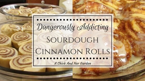 Dangerously Addicting Sourdough Cinnamon Rolls