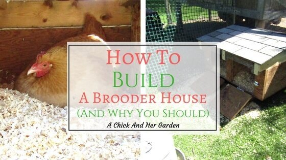 How To Build A Brooder House, And Why You Need One