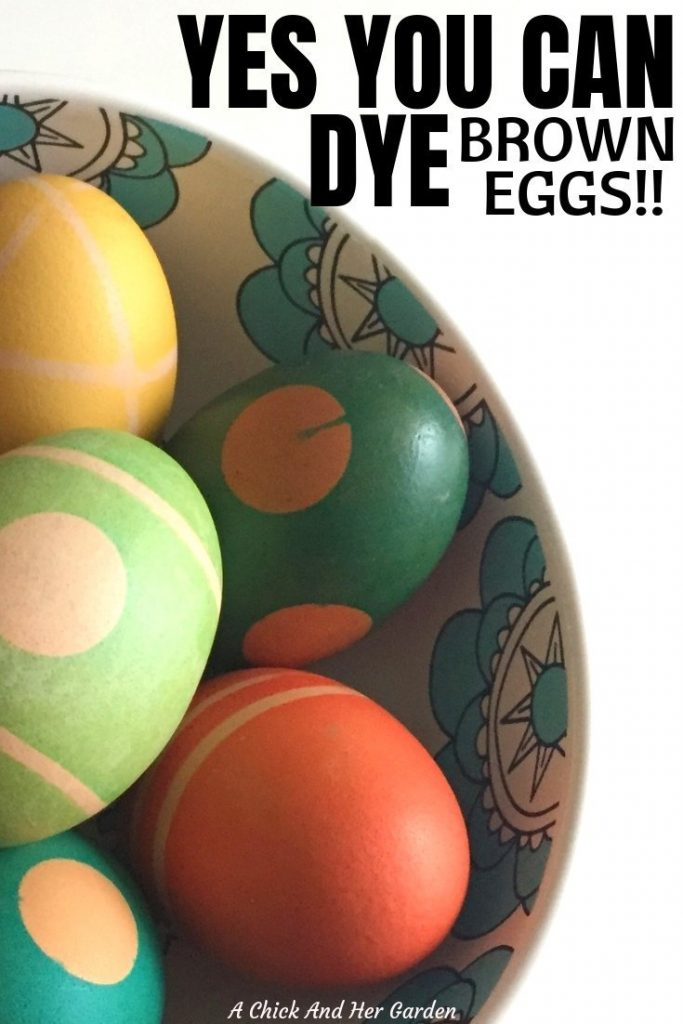 So many of my fellow chicken keepers have told me that they buy white eggs from the store for Easter! Don't do it! Did you know that you can dye brown eggs?! AND they're actually even more pretty than white eggs!! #eastereggs #coloringeggs #freerangeeggs #raisingchickens #backyardchickens #achickandhergarden