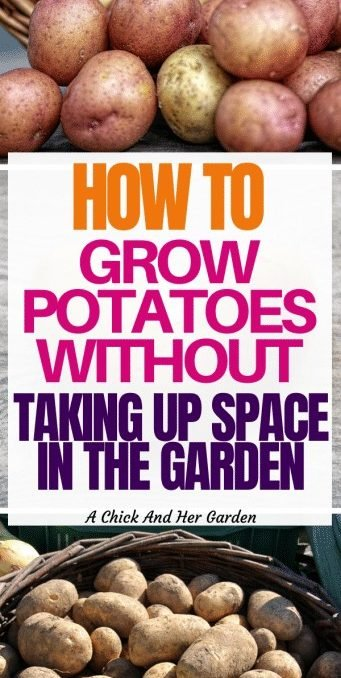 Potatoes are a staple in our house, buy they take up SO MUCH space in the garden! I'm so glad I found this post! Now that I'm not using space in the garden I have so much more space for things like tomatoes and peppers! #growingpotatoes #vegetablegarden #smallspacegardening #gardeningforbeginners #growfood #gardening #achickandhergarden