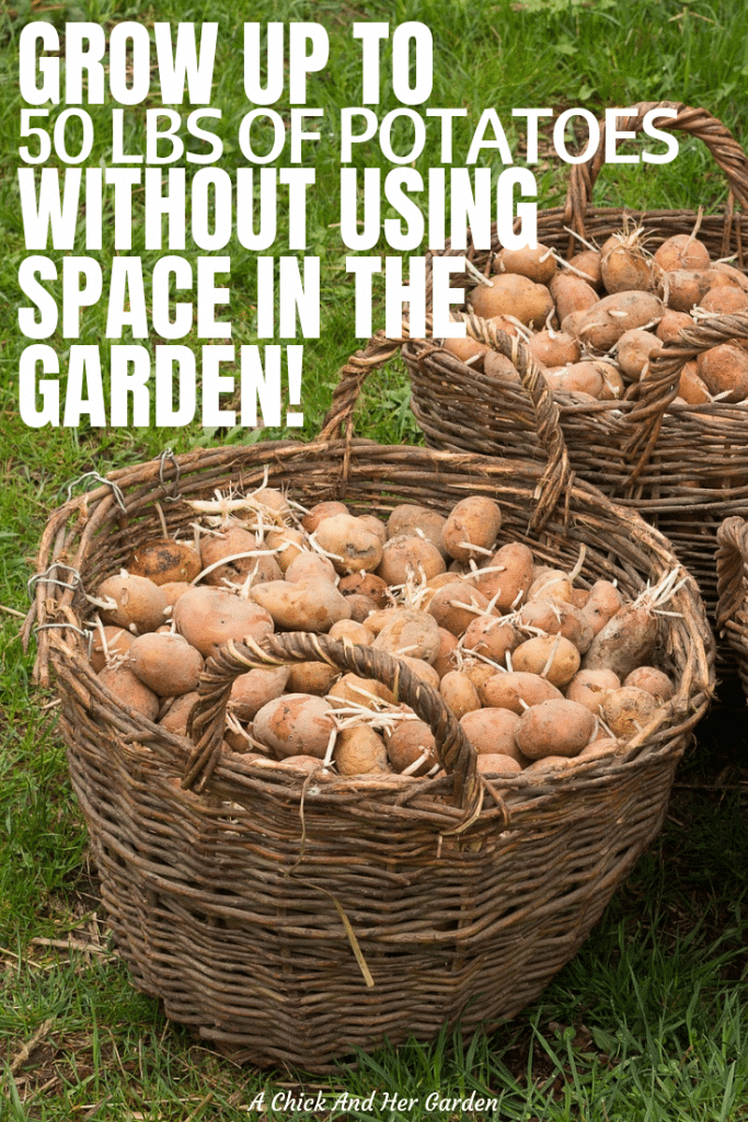 We love potatoes and it's better to grow our own, but they take up so much space in the garden! This trick to save space growing potatoes has been a life saver! Now we have more room in the garden for our favorites, like tomatoes!! #vegetablegarden #growingpotatoes #gardenhacks #achickandhergarden
