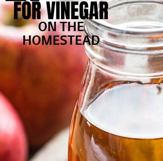 We go through so much vinegar on our homestead! But surprisingly we've actually saved money because of it! This is a great list of ways you can use vinegar on your homestead! #naturalcleaning #vinegarforlivestock #naturalhealth #applecidarvinegaruses #vinegararoundthehouse #achickandhergarden