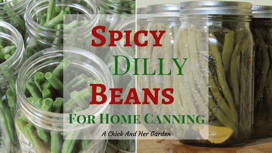 Spicy Dilly Beans