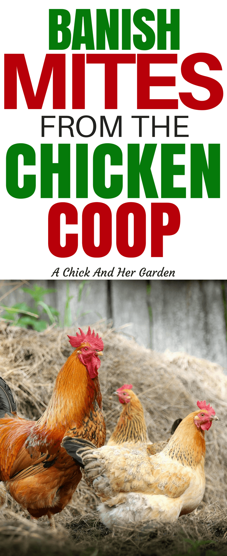 When you find mites in the chicken coop it's almost enough to want to give up chickens! Let's face it, they make your skin crawl! But don't give up yet. This is how you treat your chicken coop for mites, and keep them away! #mitesinthechickencoop #chickens #backyardchickens #raisingchickens #homesteading #achickandhergarden