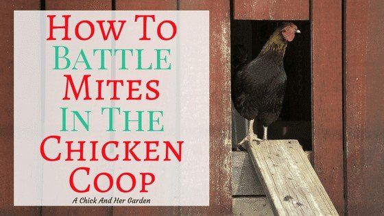 How To Treat Your Chicken Coop For Mites
