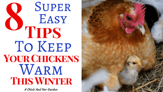 How To Keep Your Chickens Warm In The Winter