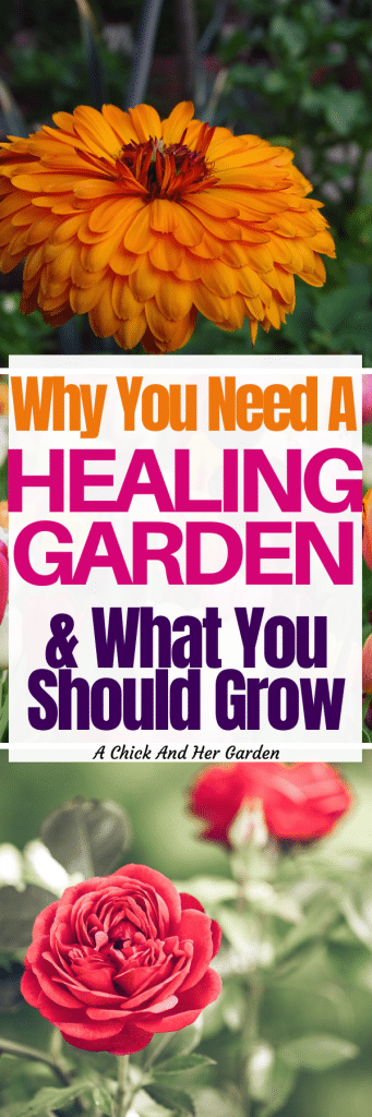 When I started making soaps I knew I needed to put in a healing garden! This list of plants was so helpful! #gardening #healinggarden #homesteadgardens #naturalliving #achickandhergarden