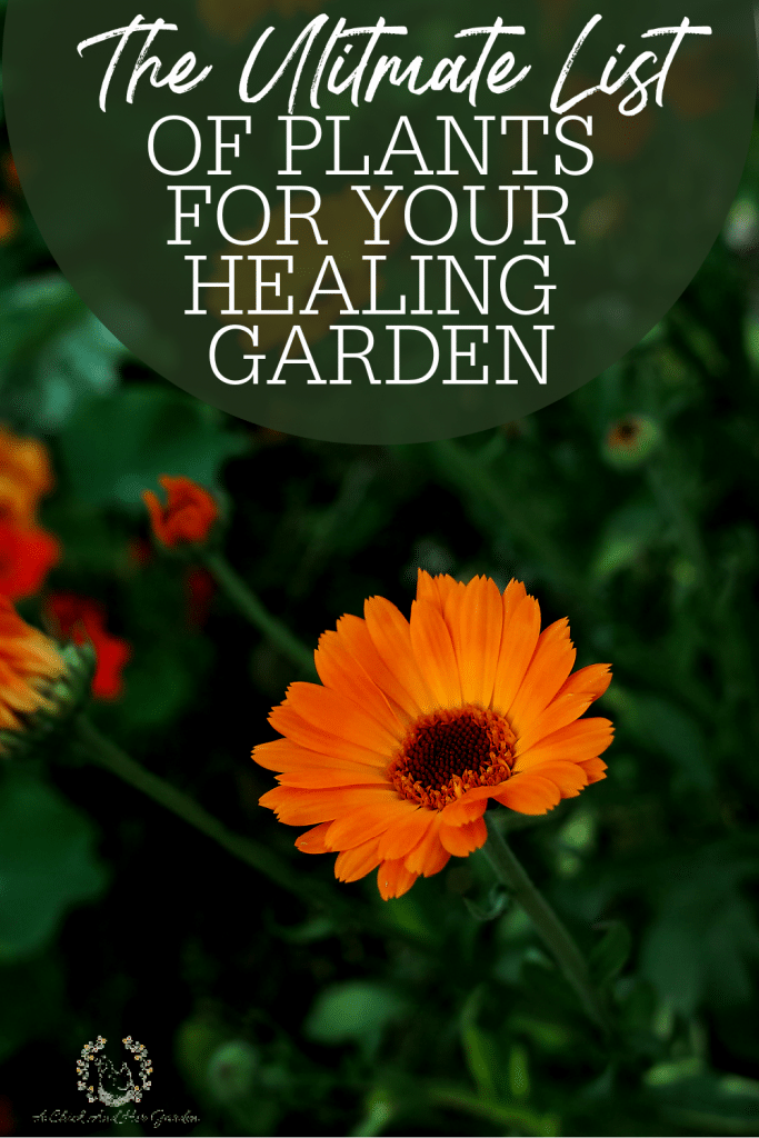 Not only are gardens beautiful, they can be full of healing as well! This truly is the ultimate list of plants to add to your healing garden! #herbgardens #healinggardens #gardeningforbeginners #gardenlove #growagarden #sustainableliving #simplelife #achickandhergarden