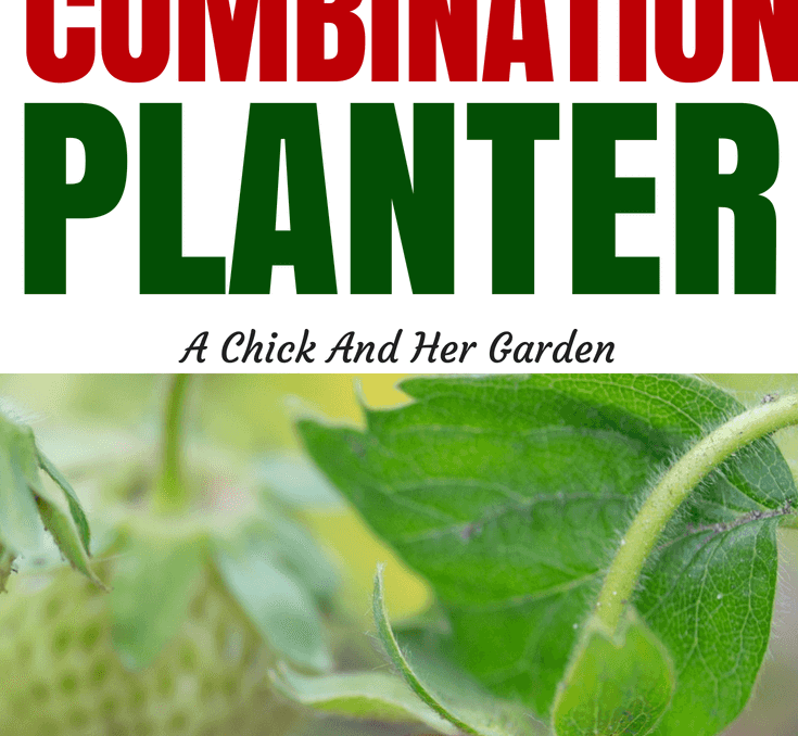 Combination planters don't just have to be about flowers! Grow your own salad bar or herb garden to beautify your landscape! This is a great list of plants to mix and match for color and food! #homesteadanywhere #containergardening #landscape #growfoodnotlawns #smallspacegardening #achickandhergarden