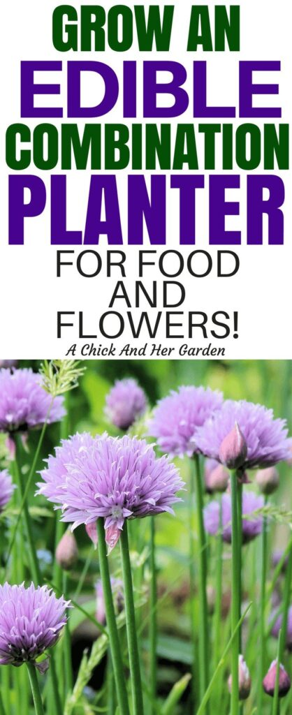 Mix and match you flowers with produce and make edible landscaping out of your planters! This is a great list of edible plants and flowers to make the most of your small space! #smallspacegardening #homesteadanywhere #growfoodnotlawns #gardening #landscaping #achickandhergarden