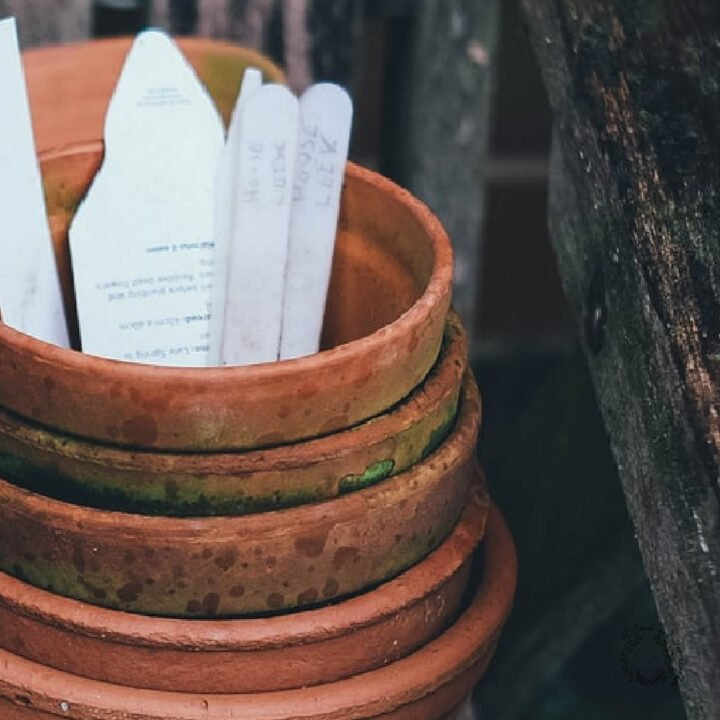 stacked terracotta pots with white plant labels in them on an aged wooden bench