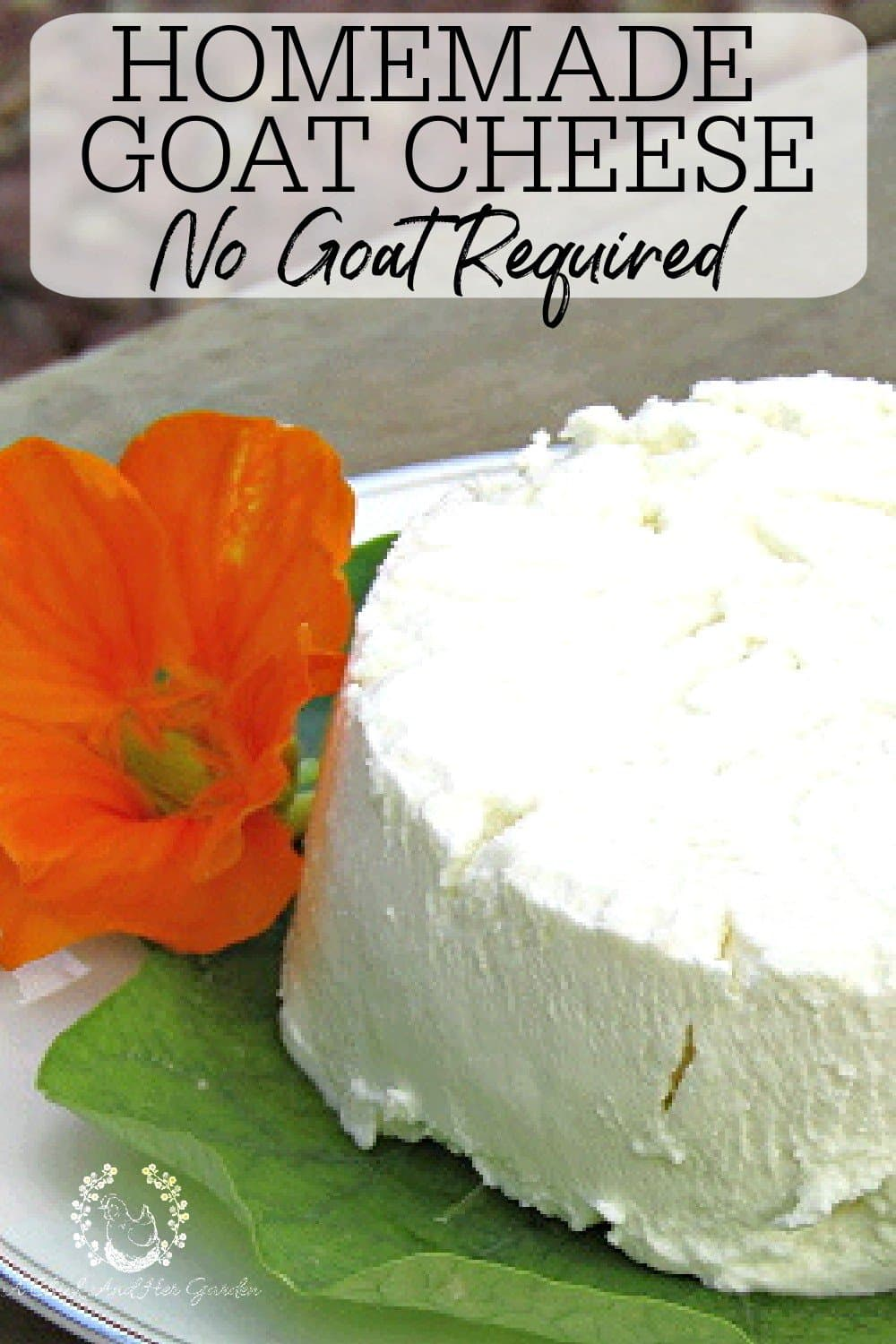 I've always wanted to make cheese, but was so intimidated by it. Homemade goat cheese was perfect to start with! It was so easy! It turned out perfect and now we always have some on hand! Goat cheese can be used for so many different things that I end up making it almost weekly! #goatcheese #cheesemaking #fromscratchcooking #fromscratchrecipes #chevre #achickandhergarden
