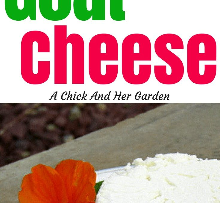 If you're a goat cheese lover but have never tried fresh, homemade goat cheese, you have to try this recipe! It was so easy and turned out creamy and delicious! Not to mention only 4 ingredients and no rennet needed! #cheesemaking #goatcheeserecipes #homemadecheese #fromscratchcooking #homesteadrecipes #achickandhergarden