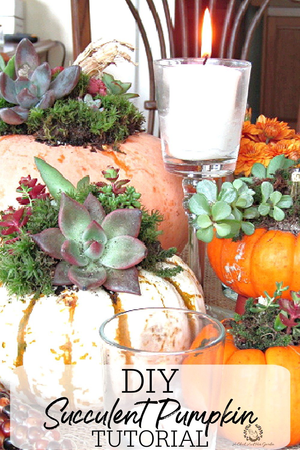 These succulents pumpkins turned out gorgeous as our centerpiece for the fall holidays! I could end up going a little overboard and popping them all over the house this season! #succulents #succulentdesign #craftingwithsucculents #succulentdecor #designingwithsucculents #DIY #achickandhergarden