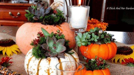 How to Make Succulent Pumpkins