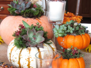 four assorted pumpkins decorated with succulents surrounded by tea light candles sunflowers and indian corn