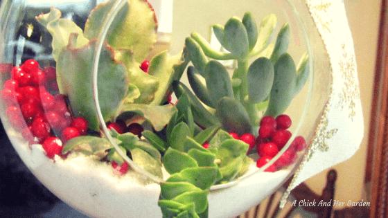 Holiday Succulent Terrarium