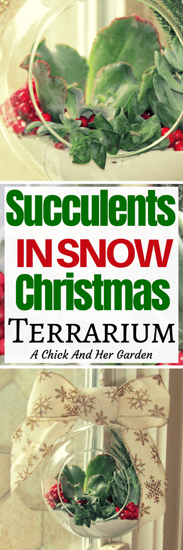 This was the perfect way to use succulents in my holiday decorations! I love the way these tender succulents look like they're growing in snow! #christmasdecorations #christmassucculents #succulents #terrarium #achickandhergarden