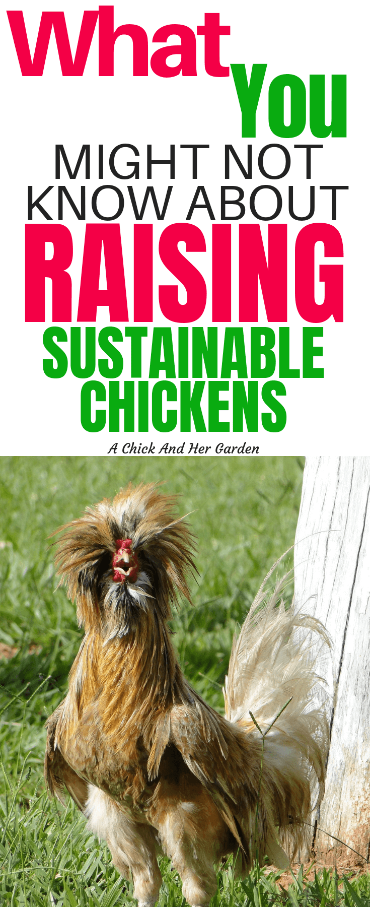 After reading her post I was shocked at how important it is for us to be raising heritage breed chickens! I have some but will be considering what new chicken breeds I can add to the flock! #sustainablechickens #sustainablelivestock #raisingchickens #backyardchickens #achickandhergarden