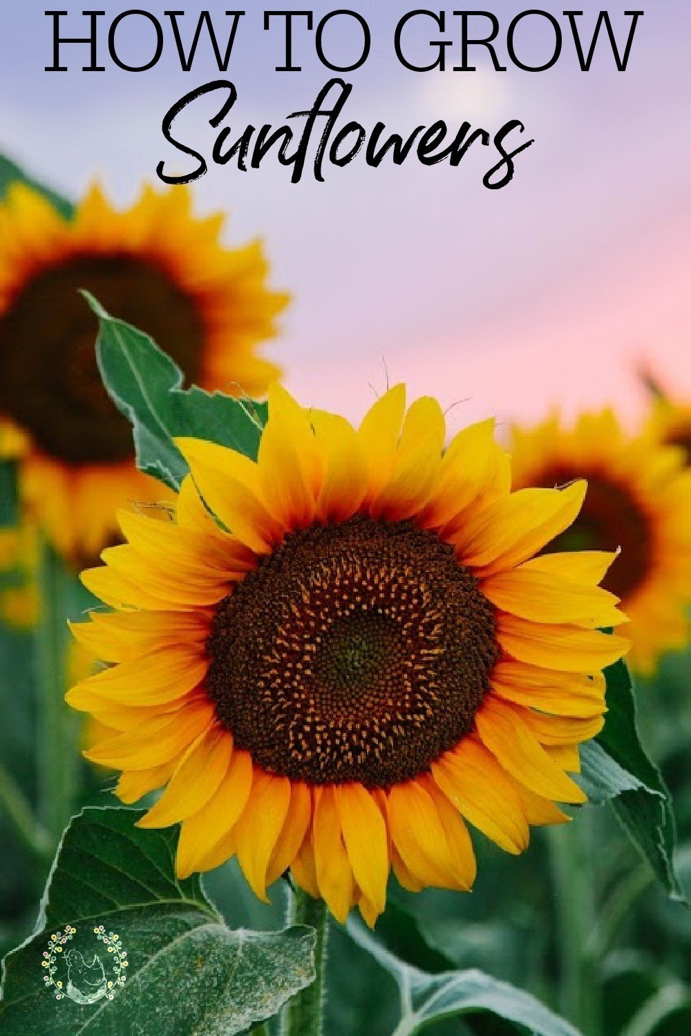 Sunflowers are more than just a pretty face! If the fact that sunflowers just make us happy to look at weren't enough, check out all the reasons you should be growing them and how to do it! #growingflowers #sunflowers #pollinators #gardening #springgardeningforbeginners #gardentips #achickandhergarden